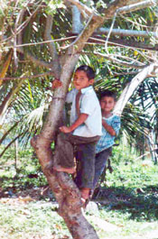 2 children climbing a palm tree